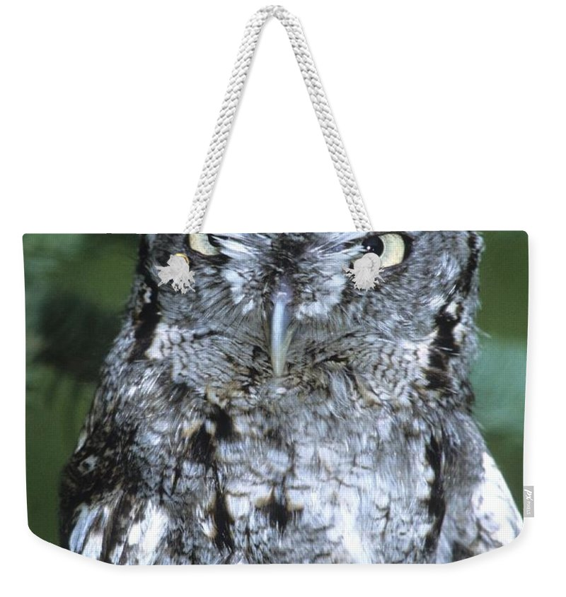 Owl Weekender Tote Bag featuring the photograph Eastern Screech Owl In Tree by Larry Allan