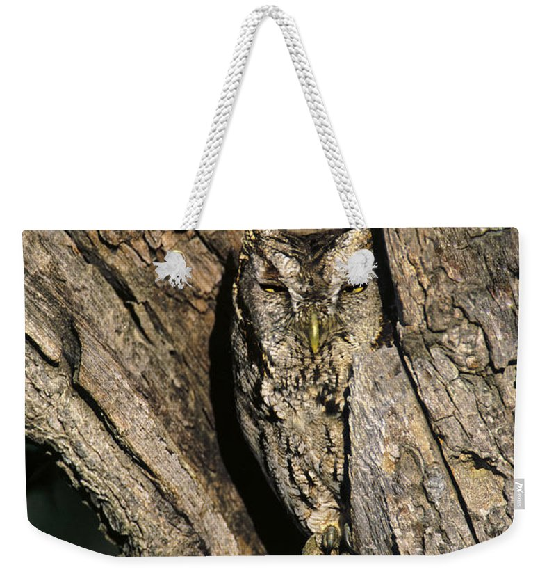 Dave Welling Weekender Tote Bag featuring the photograph Eastern Screech-owl Otis Asio Wild Texas by Dave Welling