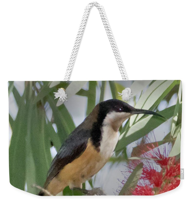 Nature Weekender Tote Bag featuring the photograph Eastern Spinebill by Hal Beral