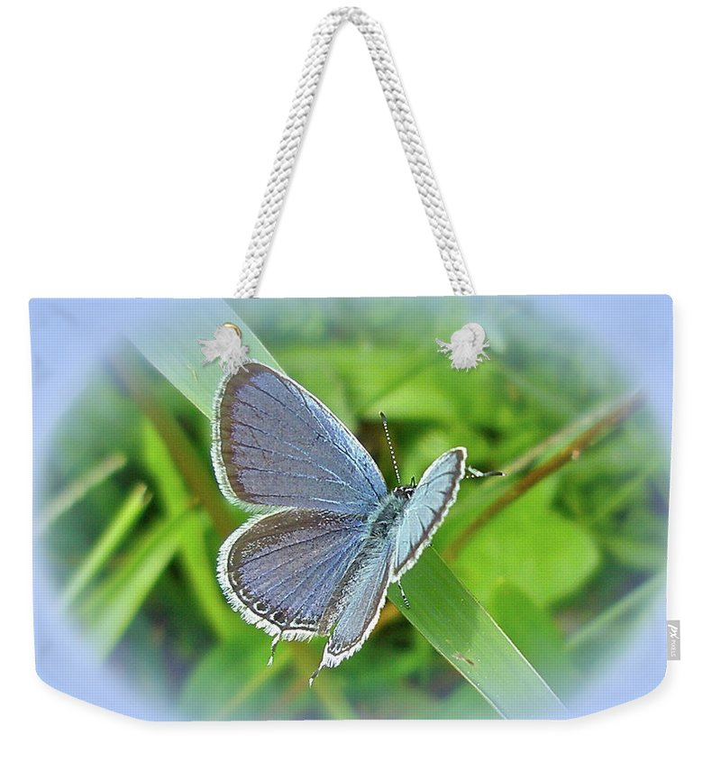 Butterfly Weekender Tote Bag featuring the photograph Eastern-tailed Blue Butterfly - Cupido Comyntas by Mother Nature