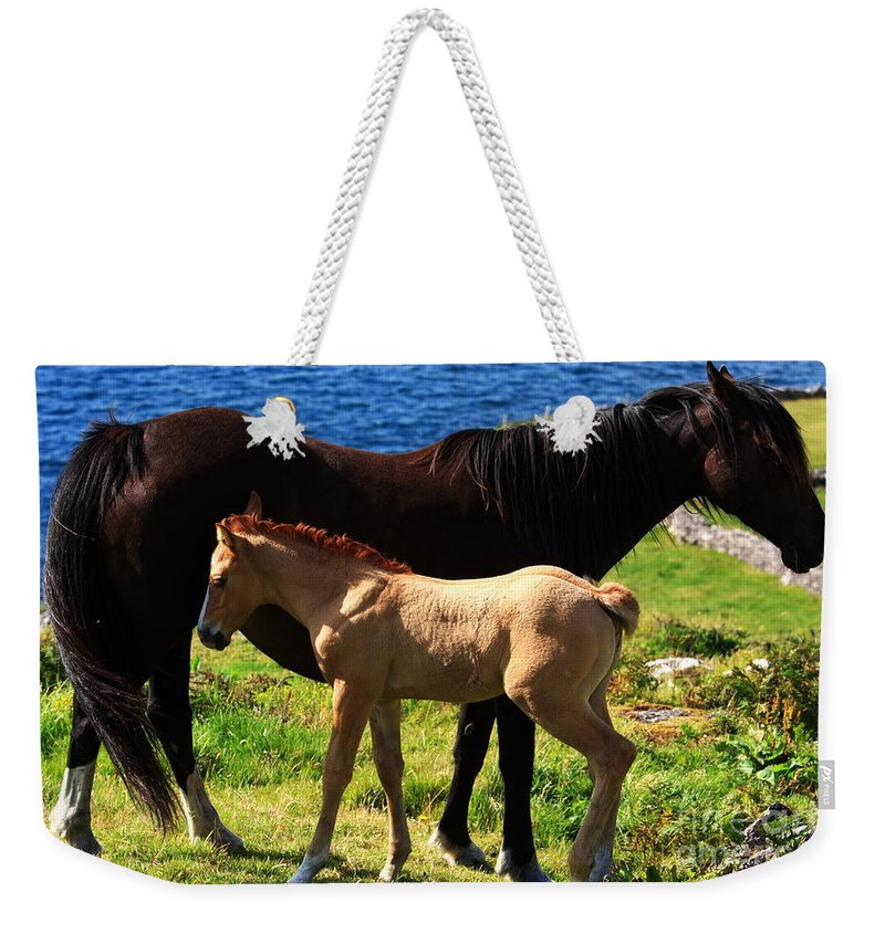 Horse Weekender Tote Bag featuring the photograph Ebony And Ivory by Aidan Moran