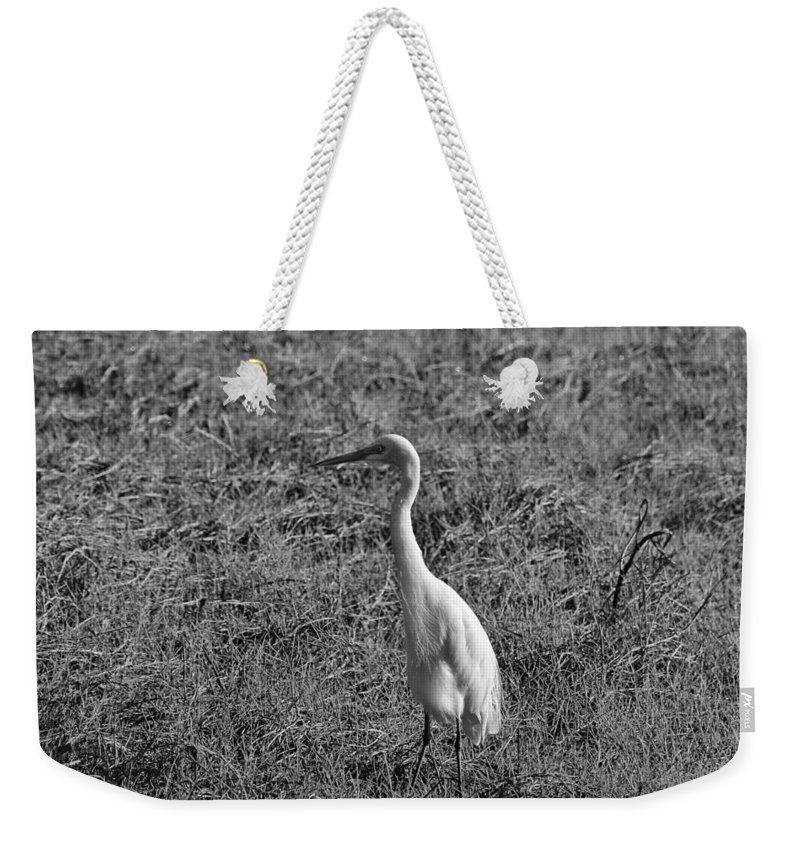 Egret Weekender Tote Bag featuring the photograph Egret In Black And White by Douglas Barnard