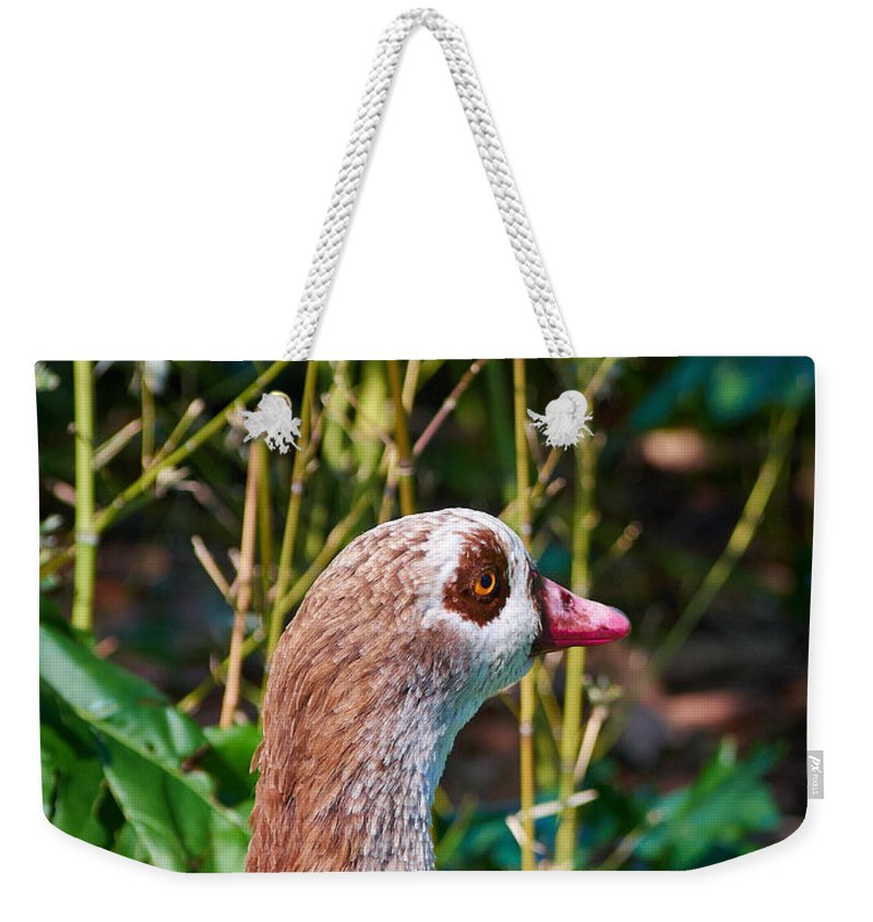 2013. Weekender Tote Bag featuring the photograph Egyptian Goose by Jouko Lehto