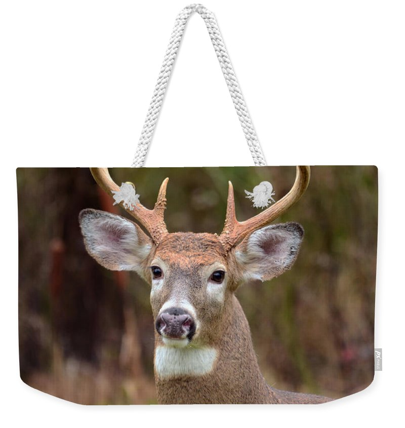 Deer Weekender Tote Bag featuring the photograph Eight Points Of Awesome by Lori Tambakis