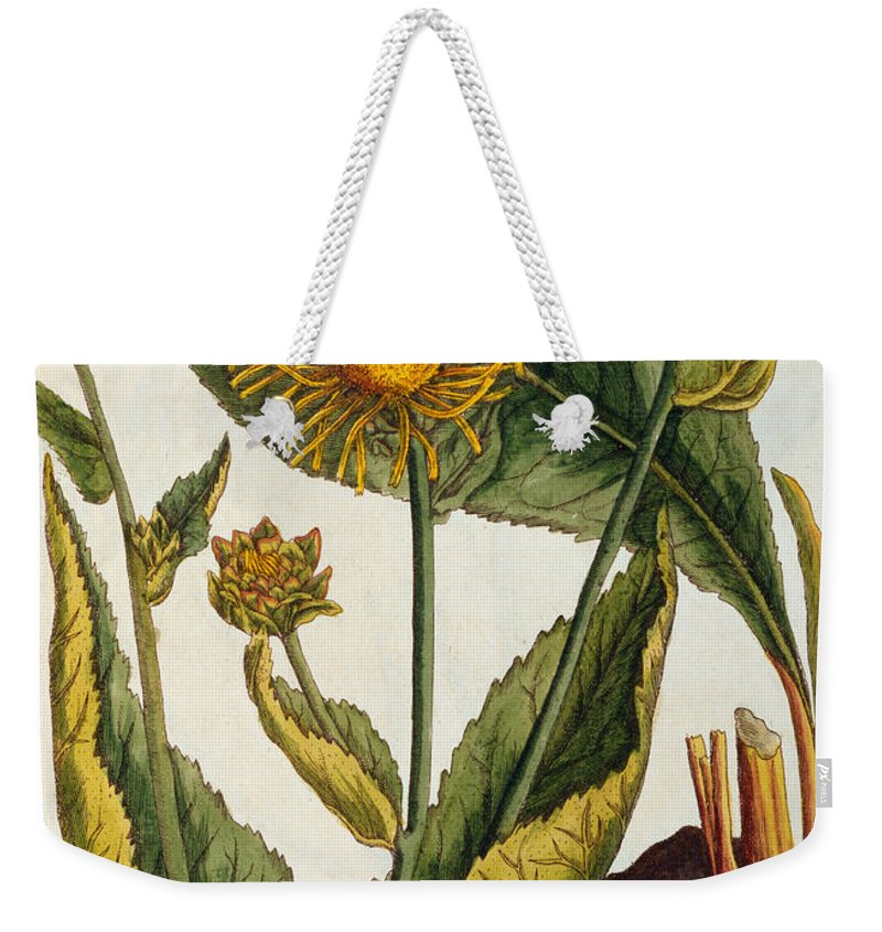 Still-life Weekender Tote Bag featuring the painting Elecampane by Elizabeth Blackwell