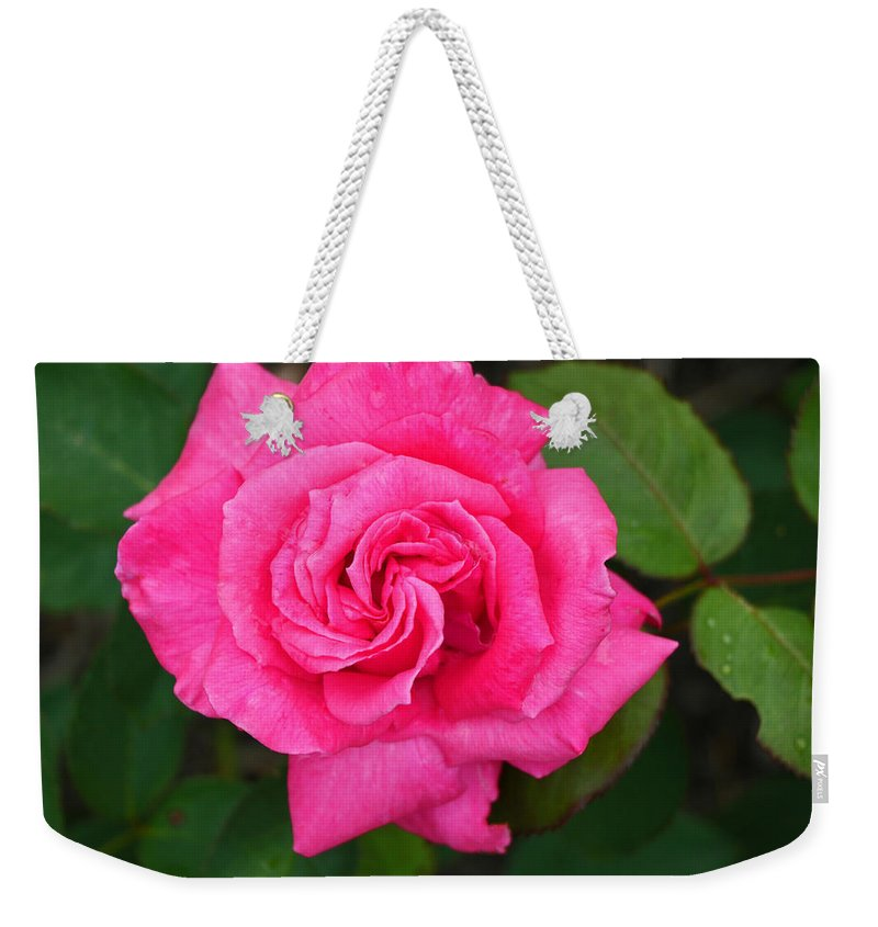 Electron Rose Weekender Tote Bag featuring the photograph Electron Hybrid Tea Rose by Allen Beatty