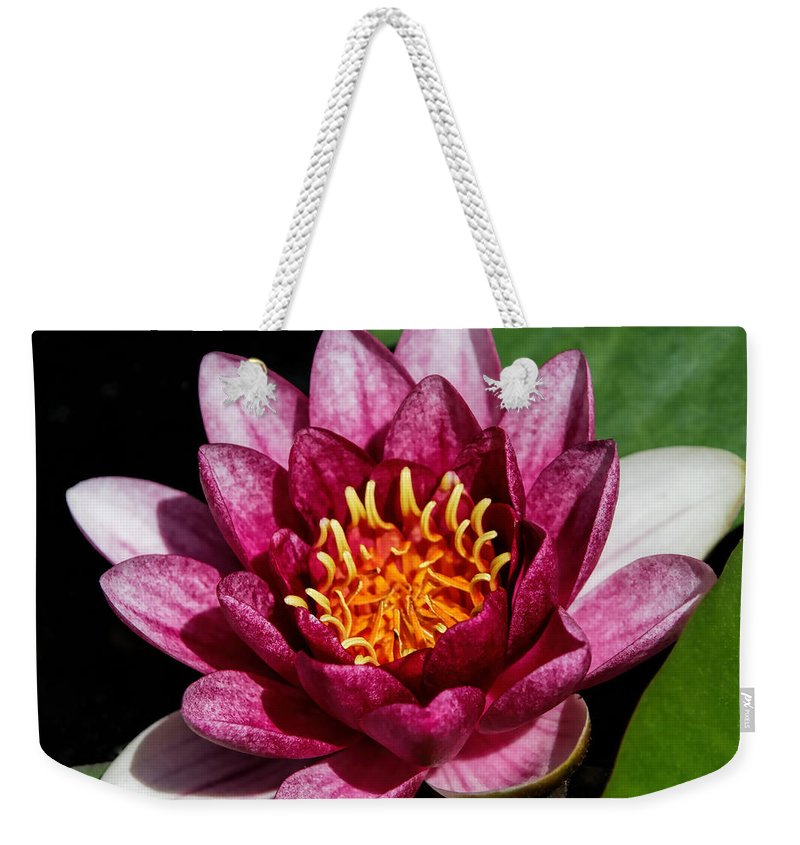 Denyse Duhaime Photography Weekender Tote Bag featuring the photograph Elegant Lotus Water Lily by Denyse Duhaime