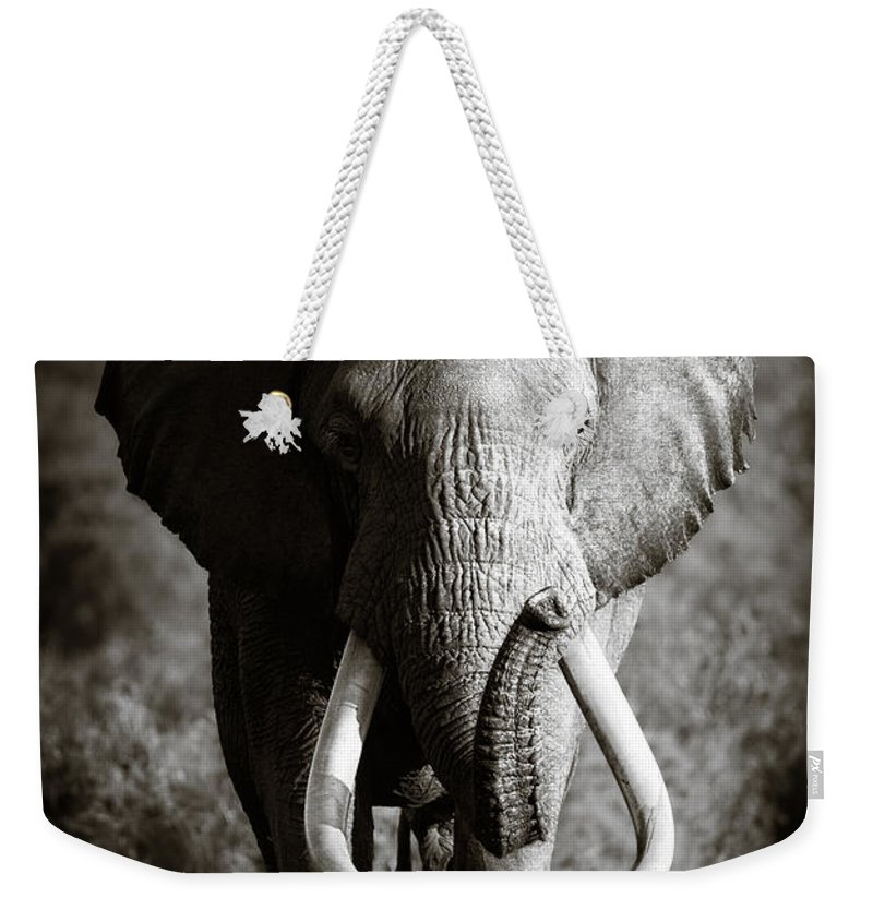 Elephant Weekender Tote Bag featuring the photograph Elephant Bull by Johan Swanepoel