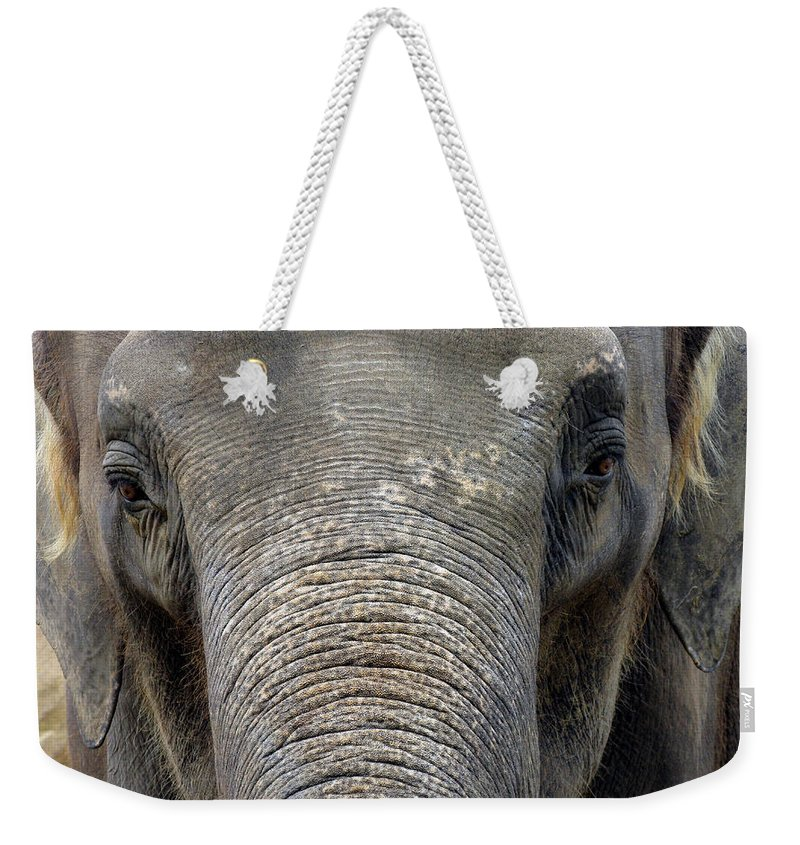 Elephant Weekender Tote Bag featuring the photograph Elephant Close Up 1 by Tom Conway