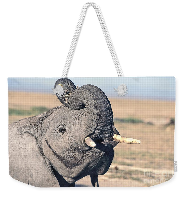 African Elephant Weekender Tote Bag featuring the photograph Elephant Curling Trunk by Liz Leyden