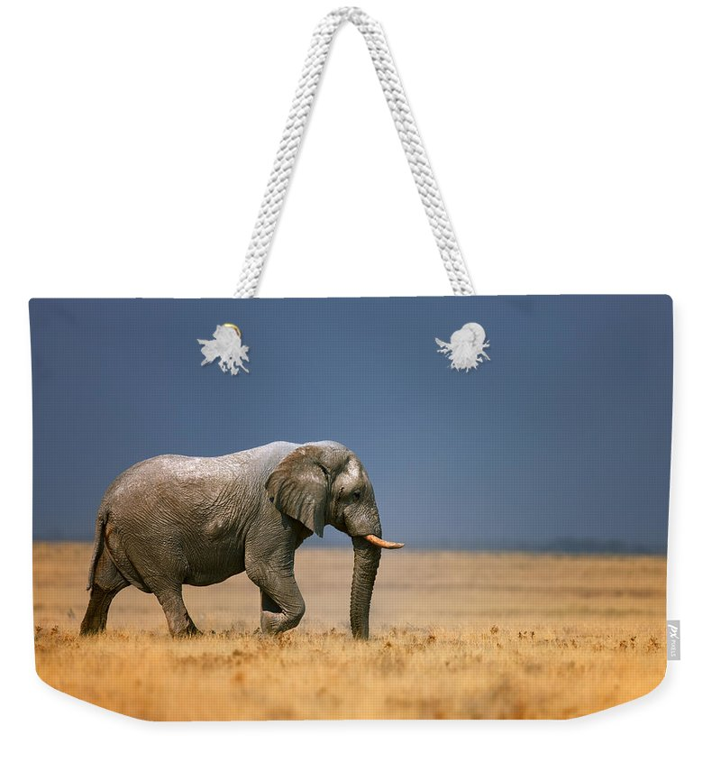 Walk Weekender Tote Bag featuring the photograph Elephant in grassfield by Johan Swanepoel