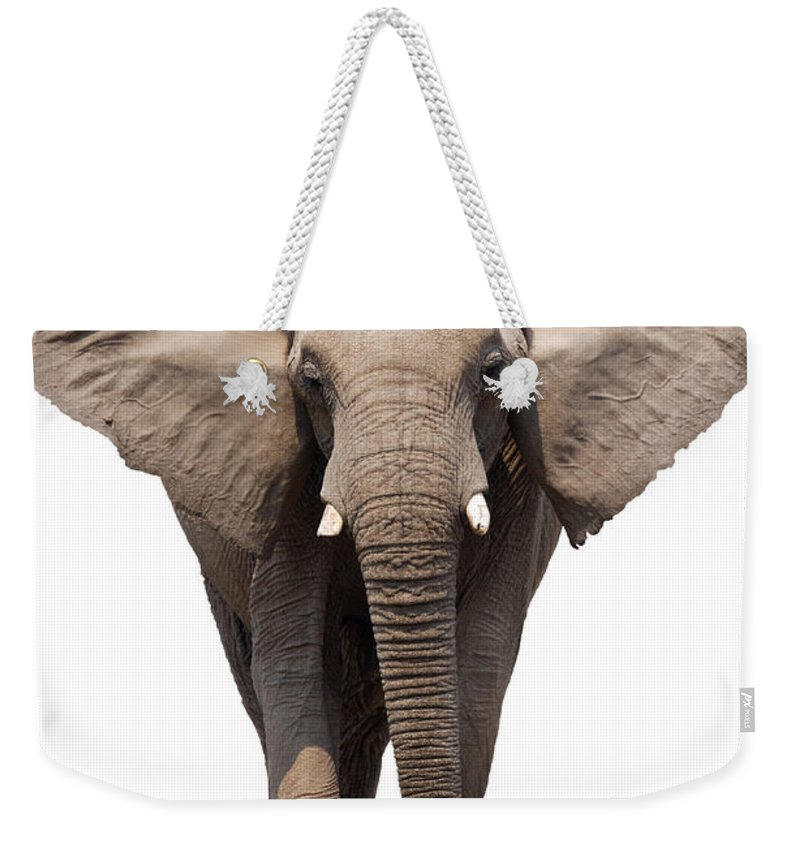 Wild Weekender Tote Bag featuring the photograph Elephant Isolated by Johan Swanepoel