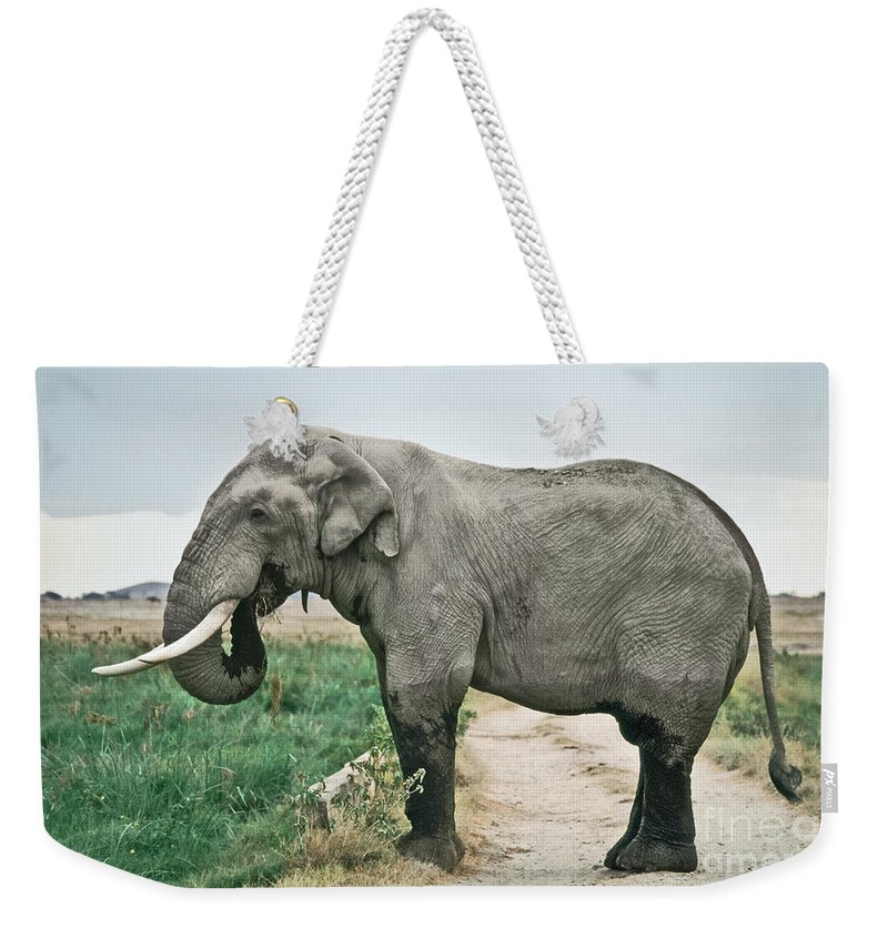 African Elephant Weekender Tote Bag featuring the photograph Elephant Roadblock by Liz Leyden