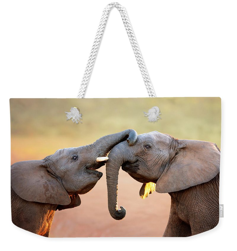 Elephant Weekender Tote Bag featuring the photograph Elephants Touching Each Other by Johan Swanepoel