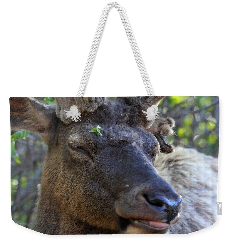 Elk Weekender Tote Bag featuring the photograph Elk Chuckle by Shane Bechler