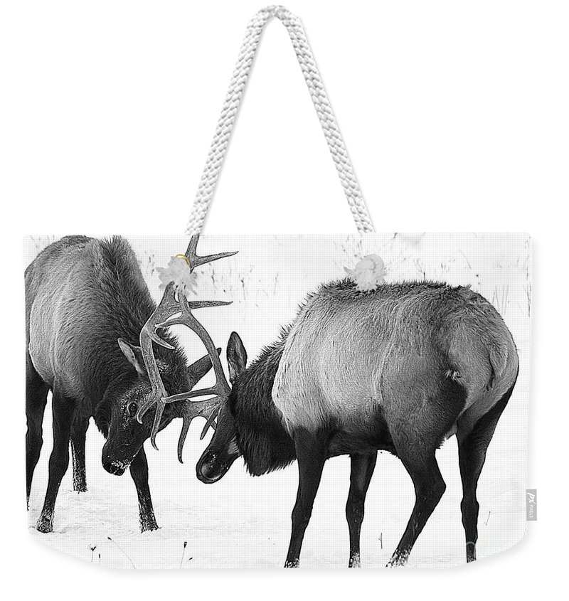 Elk Weekender Tote Bag featuring the photograph Elk Fighting Black And White by Timothy Flanigan