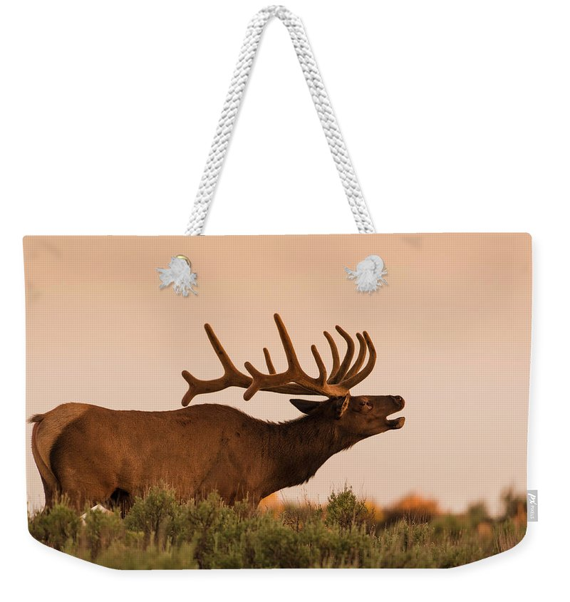 Animal Themes Weekender Tote Bag featuring the photograph Elk In Velvet On Hill In Yellowstone by © J. Bingaman Photography
