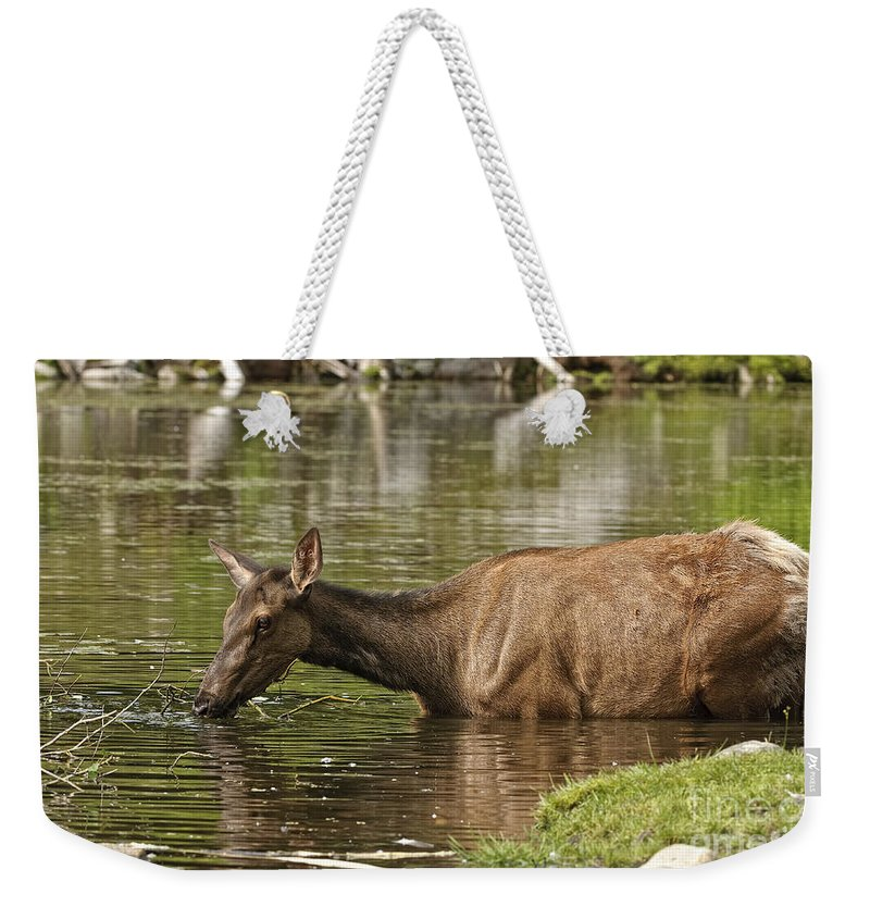 Elk Weekender Tote Bag featuring the photograph Elk Pictures 36 by World Wildlife Photography