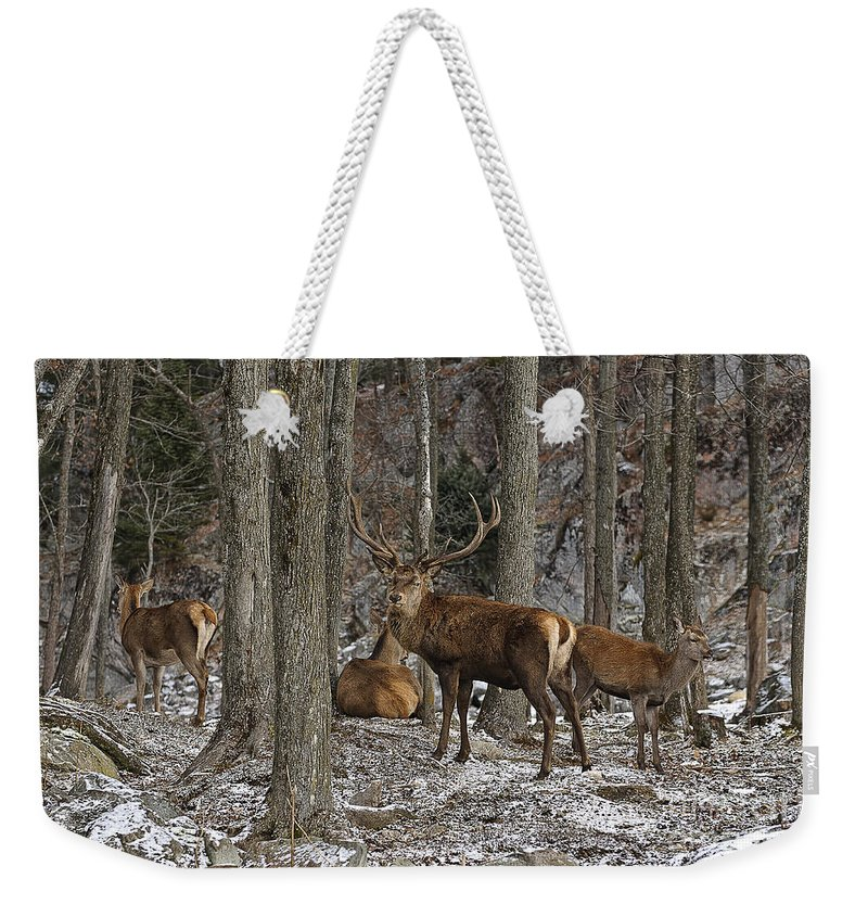 Elk Weekender Tote Bag featuring the photograph Elk Pictures 45 by World Wildlife Photography