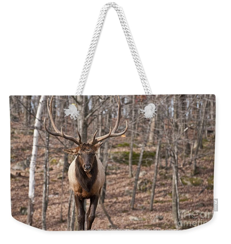 Elk Weekender Tote Bag featuring the photograph Elk Pictures 86 by World Wildlife Photography