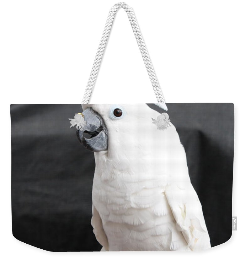 Elvis The Cockatoo Weekender Tote Bag featuring the photograph Elvis The Cockatoo by John Telfer