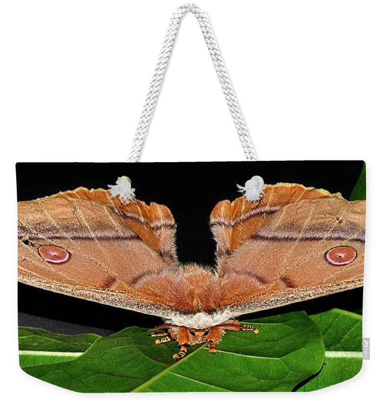 Photography Weekender Tote Bag featuring the photograph Emperor Gum Moth - 6 Inch Wing Span by Kaye Menner