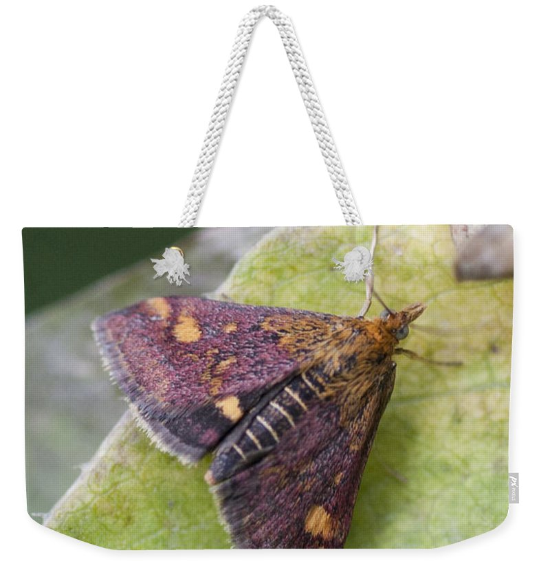 Moth Weekender Tote Bag featuring the photograph Emperor Moth by Richard Thomas