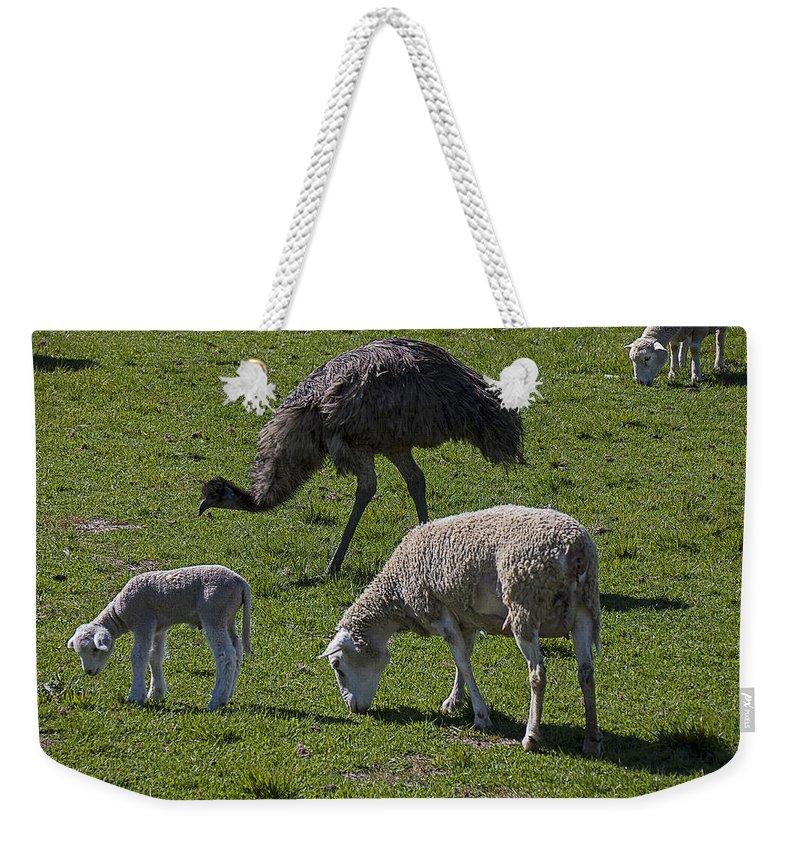 Emu Photographs Weekender Tote Bags