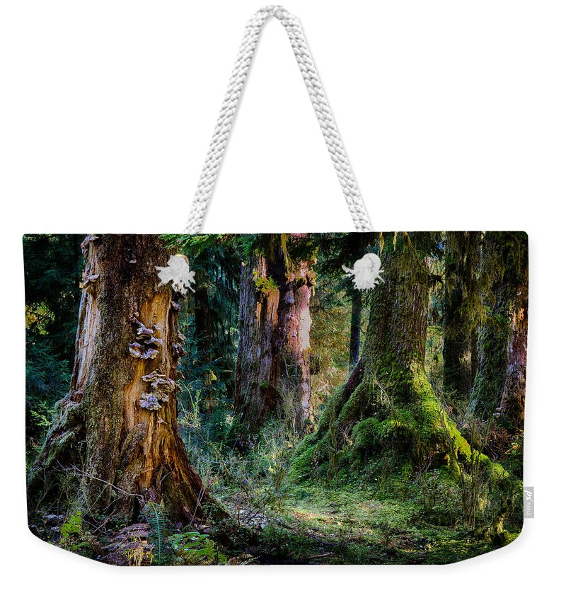 Tree Weekender Tote Bag featuring the photograph Enchanted Forest by Robert Woodward