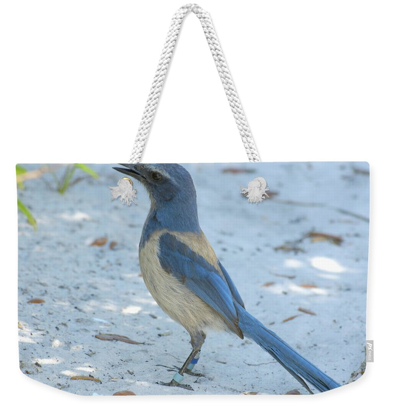 Jay Weekender Tote Bag featuring the photograph Endangered Scrub-jay by Larry Allan