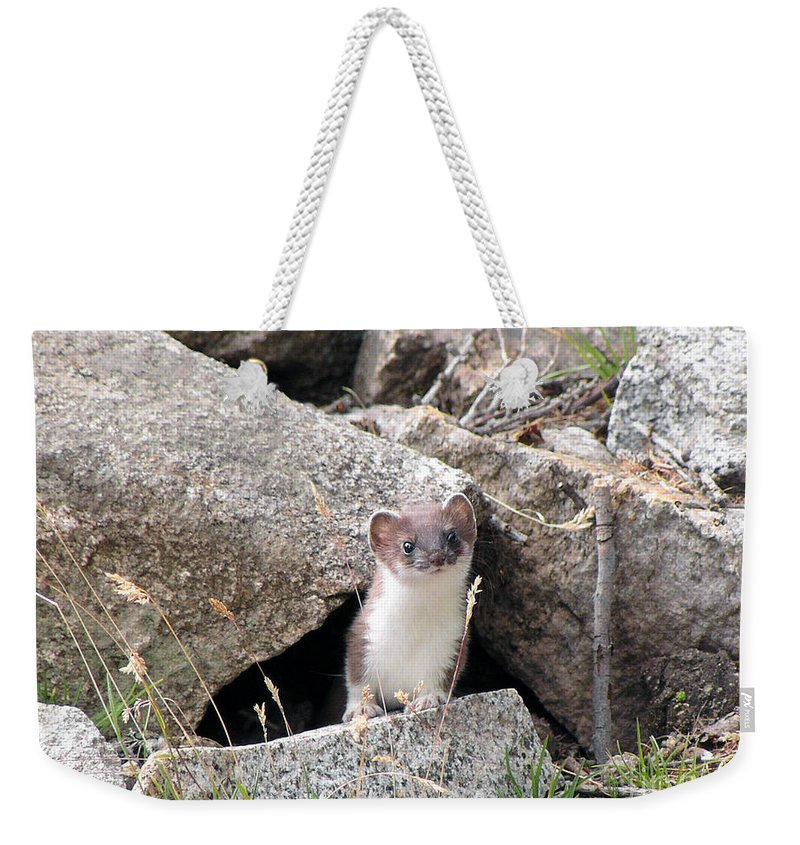 Alert Weekender Tote Bag featuring the photograph Ermine In Wildlife by Antonio Scarpi