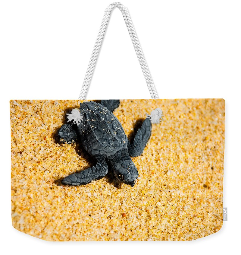 Baby Loggerhead Weekender Tote Bag featuring the photograph Escape by Sebastian Musial