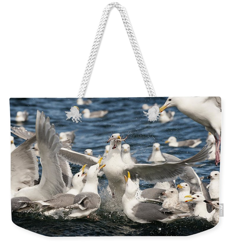 Gull Weekender Tote Bag featuring the photograph Escape Velocity by Ted Raynor