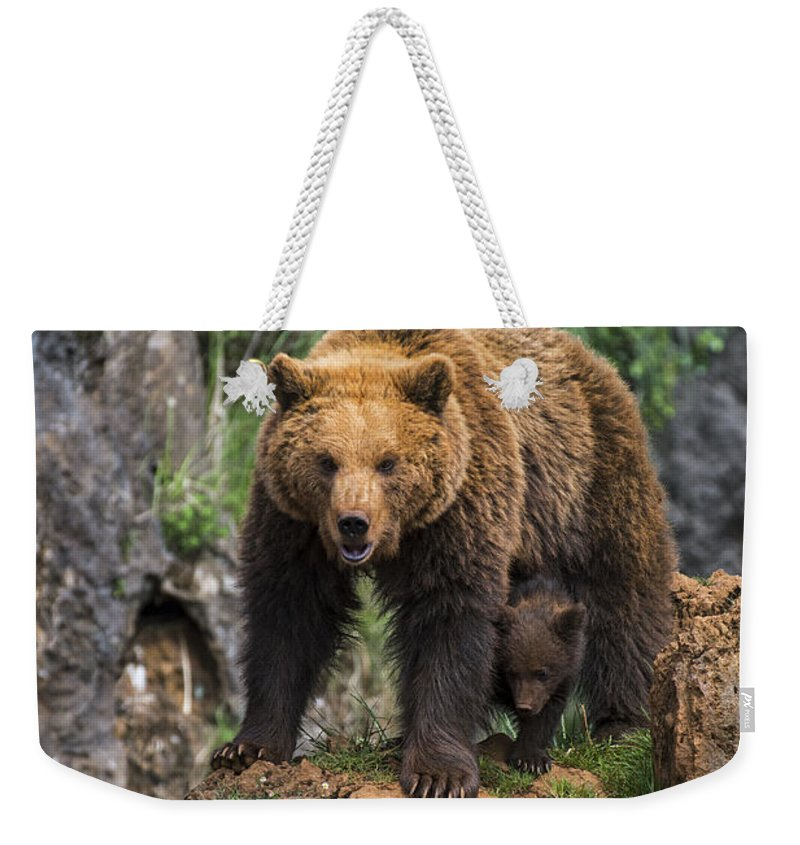 Mother Weekender Tote Bag featuring the photograph Eurasian Brown Bear 14 by Arterra Picture Library