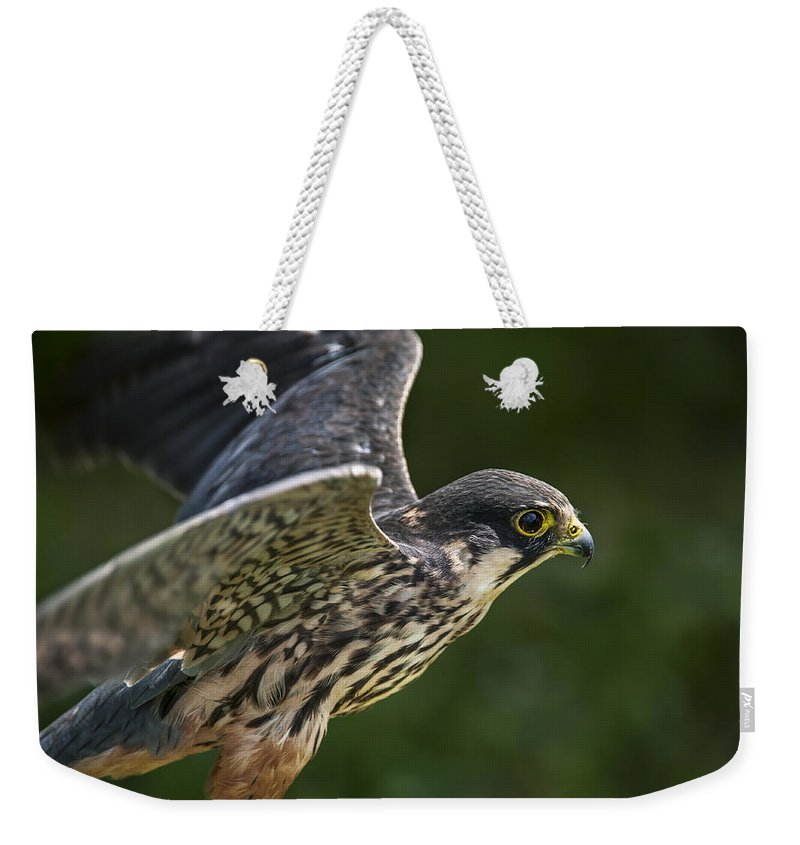 Eurasian Hobby Weekender Tote Bag featuring the photograph Eurasian Hobby 2 by Arterra Picture Library