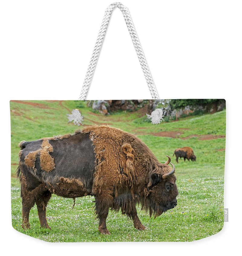 European Bison Weekender Tote Bag featuring the photograph European Bison 4 by Arterra Picture Library