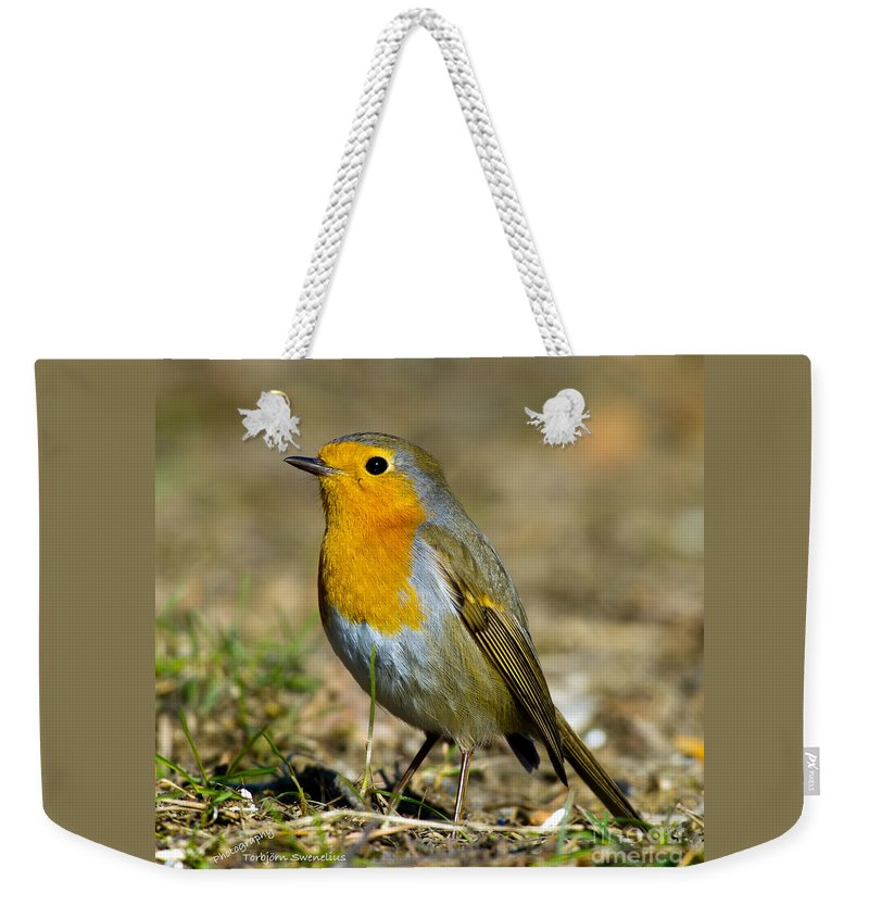 European Robin Square Weekender Tote Bag featuring the photograph European Robin Square by Torbjorn Swenelius