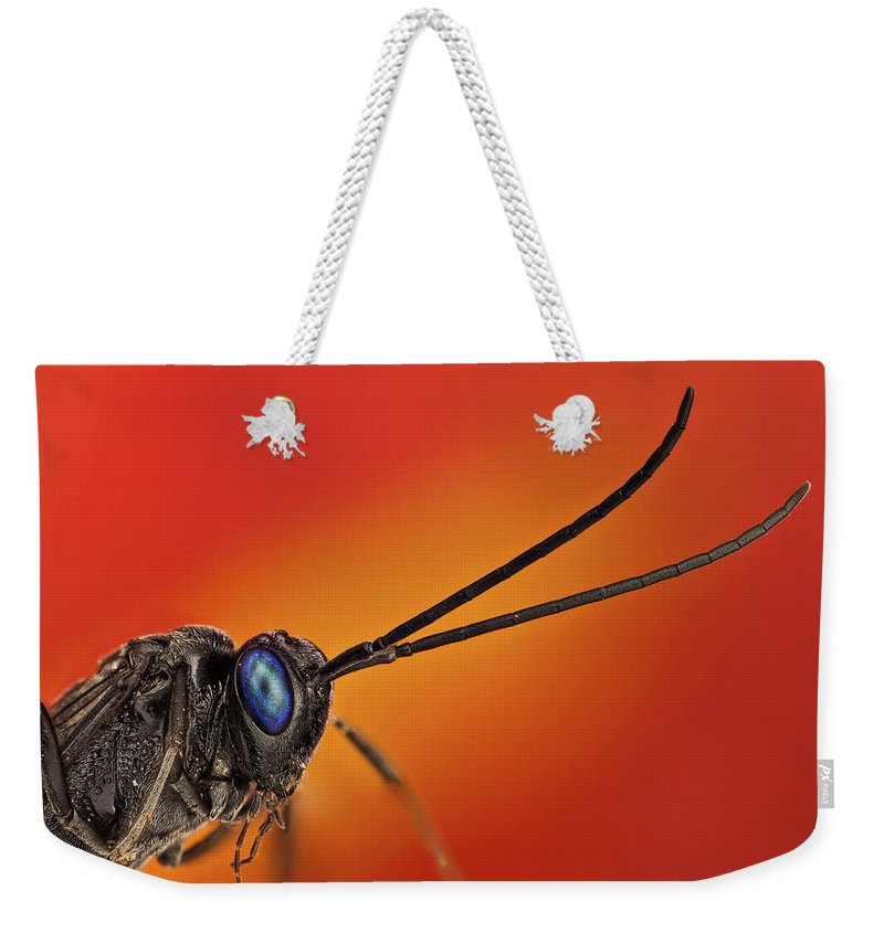Focus Stacking Weekender Tote Bag featuring the photograph Evania Appendigaster 3x by Javier Torrent - Vwpics