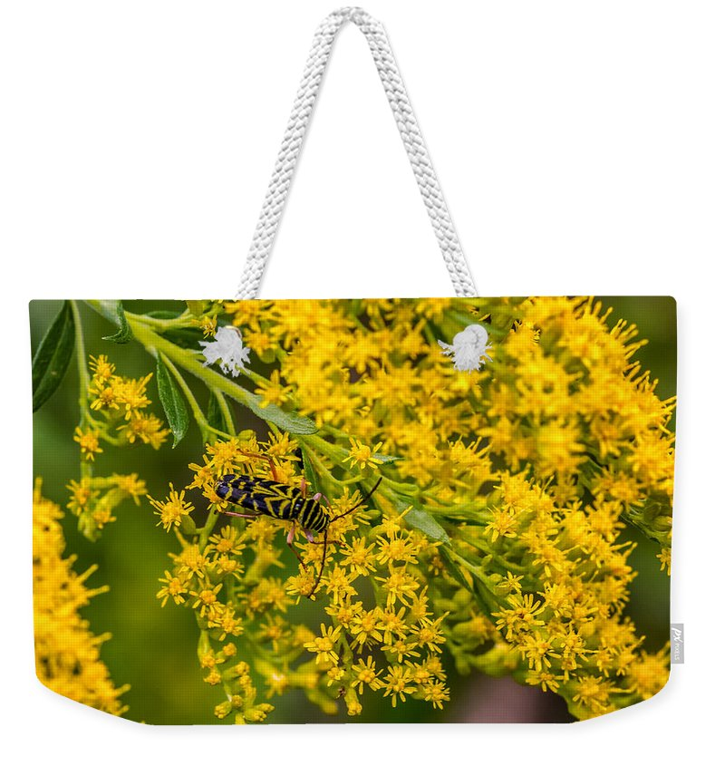 Weekender Tote Bag featuring the photograph Exploring Goldenrod 4 by Steve Harrington