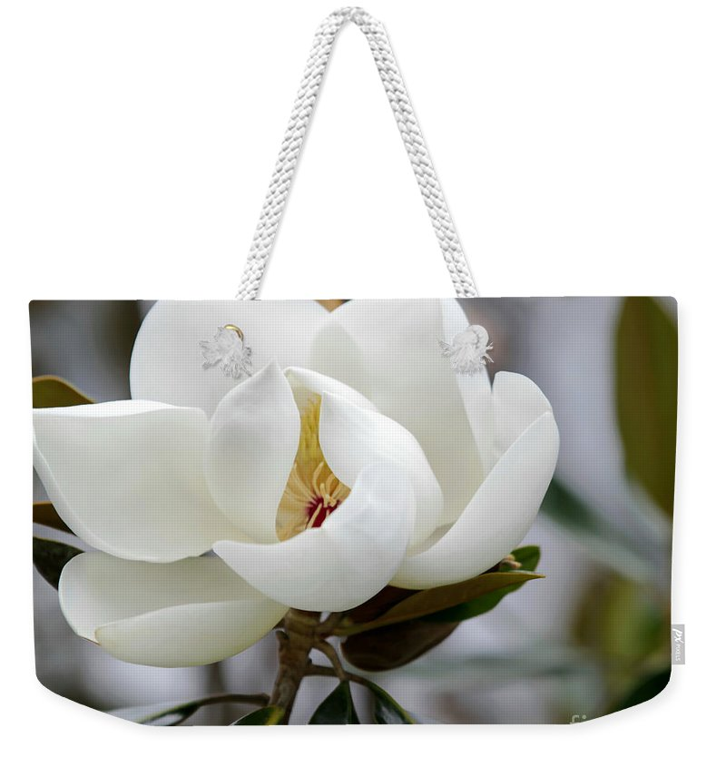 Art Weekender Tote Bag featuring the photograph Exquisite Magnolia by Sabrina L Ryan