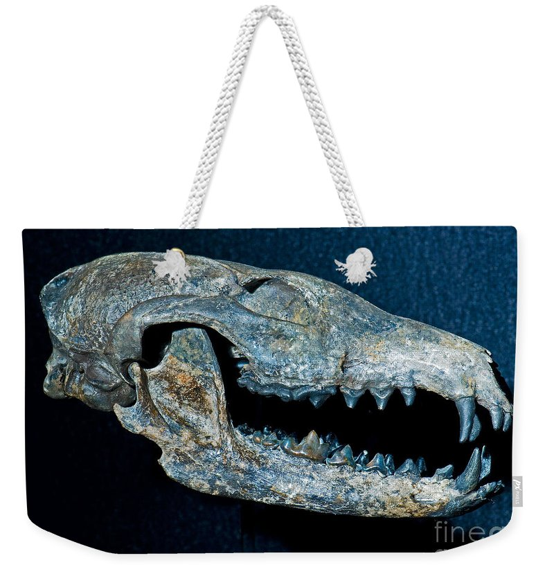 Nature Weekender Tote Bag featuring the photograph Extinct Gray Fox by Millard H. Sharp