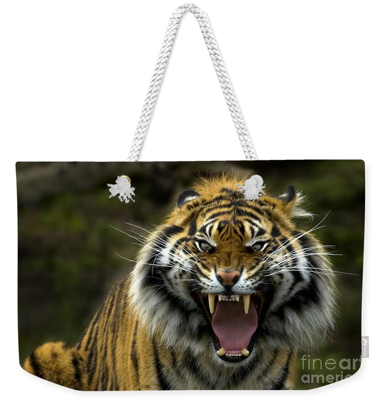 Tiger Weekender Tote Bag featuring the photograph Eyes Of The Tiger by Mike Dawson