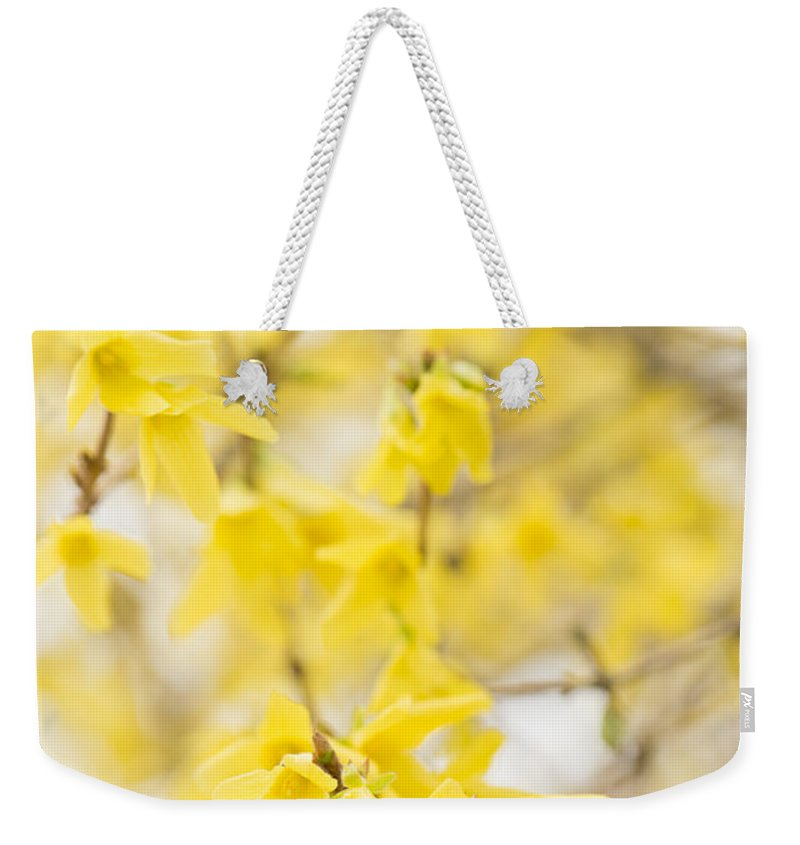 Forsythia Weekender Tote Bag featuring the photograph Fabulous Forsythia by Anne Gilbert