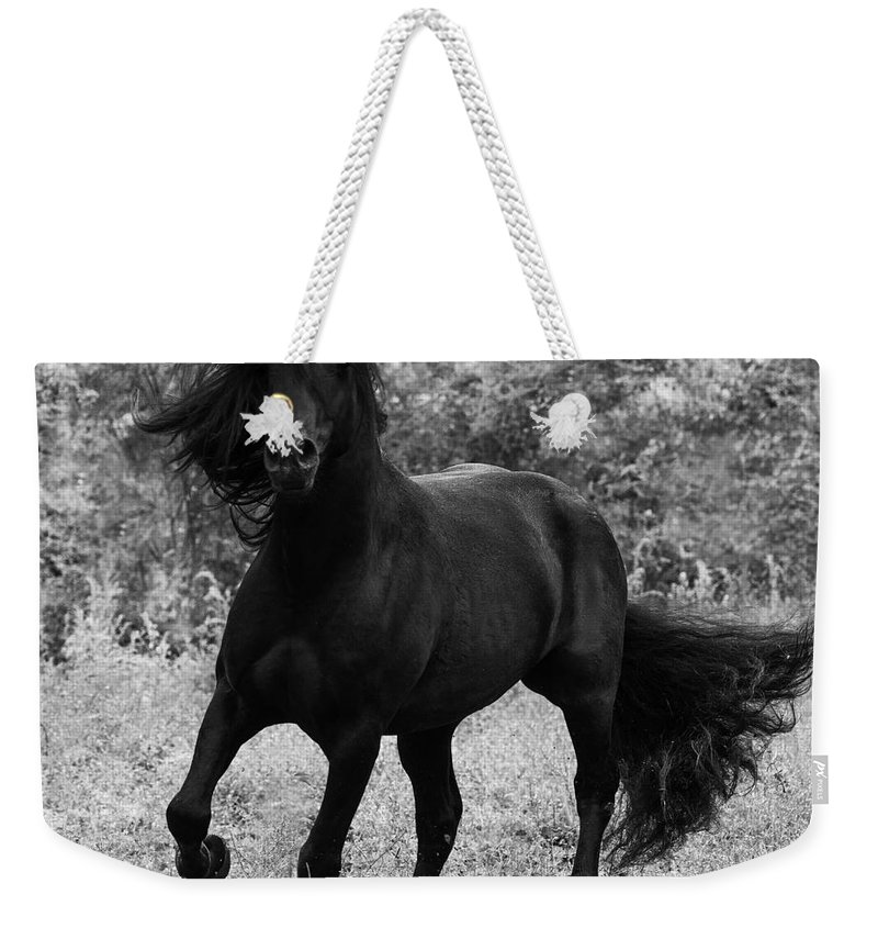 France Weekender Tote Bag featuring the photograph Fairy Tale Stallion by Carol Walker