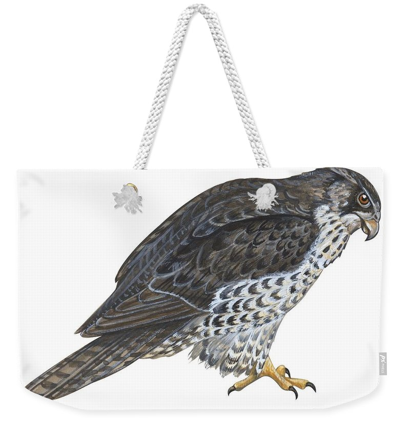 No People; Horizontal; Side View; Full Length; White Background; One Animal; Wildlife; Close Up; Zoology; Illustration And Painting; Bird; Beak; Feather; Talon; Animal Pattern; Falcon; Falco Rusticolus; Bird Of Prey Weekender Tote Bag featuring the painting Falcon by Anonymous