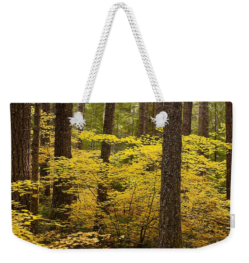 Forest Weekender Tote Bag featuring the photograph Fall Foliage by Belinda Greb