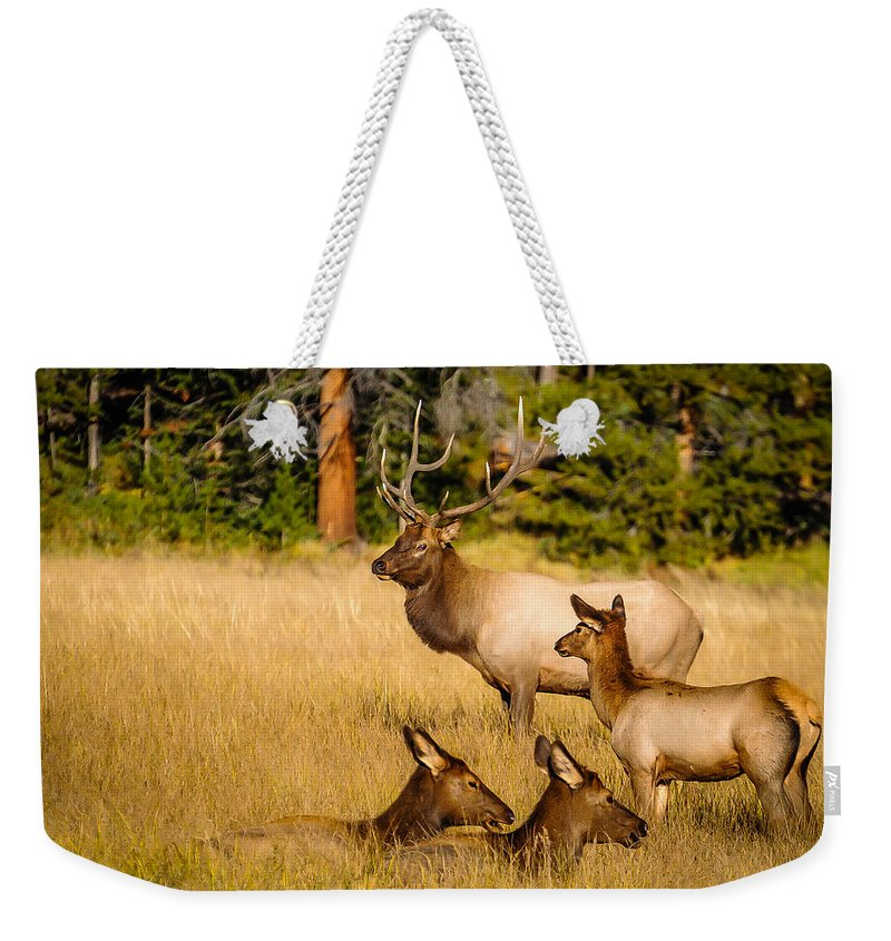 Elk Weekender Tote Bag featuring the photograph Fall Is Family Time by Edie Snell