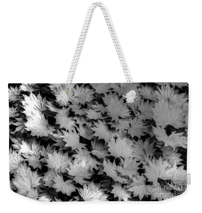 Sunlight Weekender Tote Bag featuring the photograph Fall Leaves by Tap On Photo