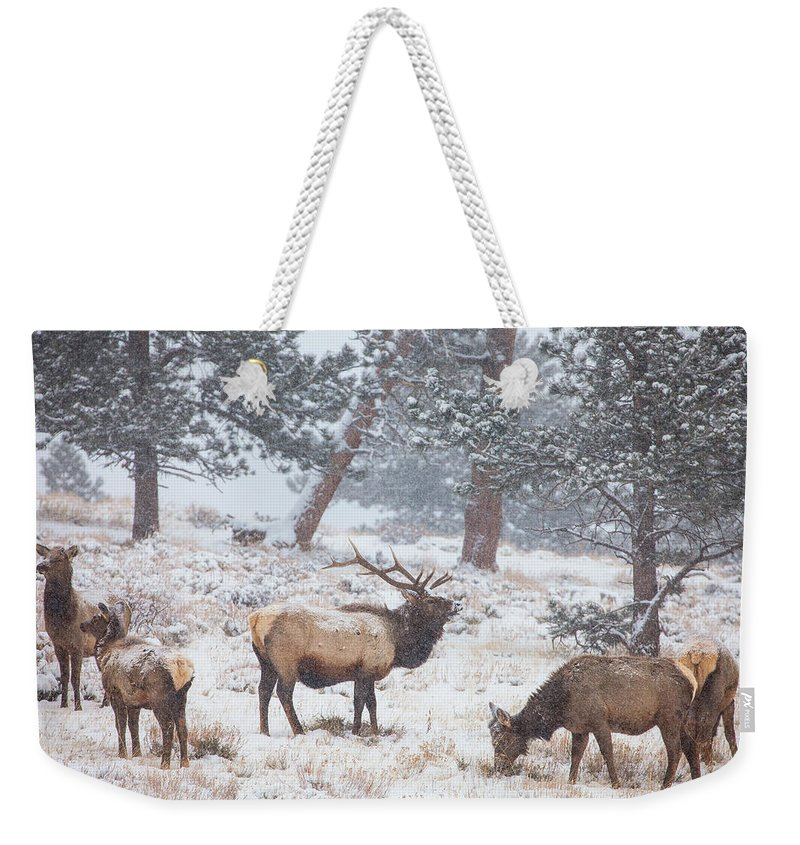 Elk Weekender Tote Bag featuring the photograph Family Man by Darren White