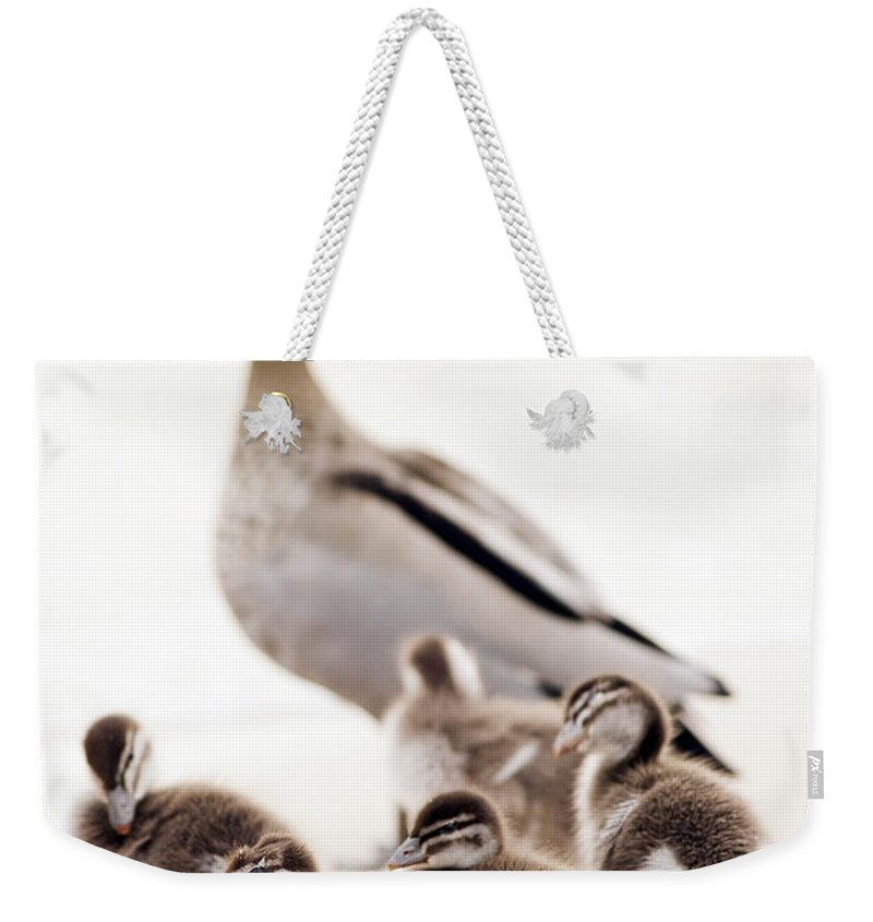 Ducklings Weekender Tote Bag featuring the photograph Family Of Ducks by Tim Hester